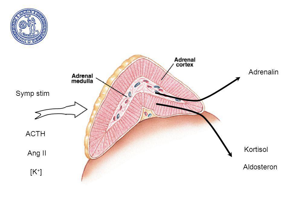ACTH Symp stim Ang II [K+] Adrenalin Kortisol Aldosteron
